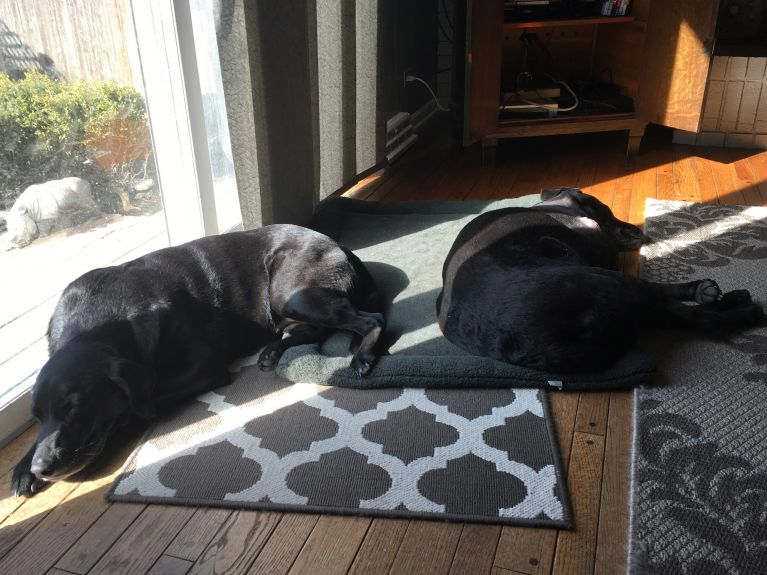 Otis and Tess sleeping in the sun. This day gave me so much joy!