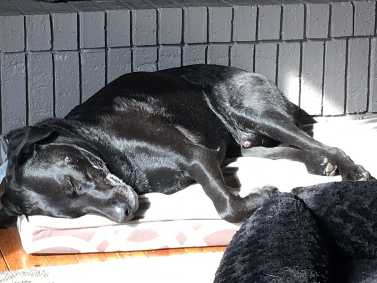 We love sleeping in the sun!