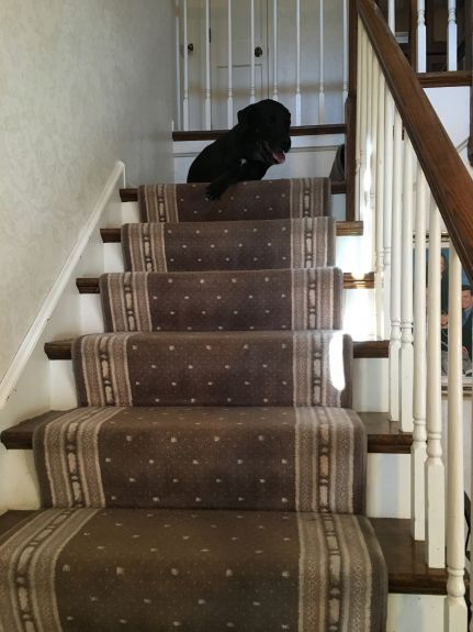 Can a tripawd do stairs?
