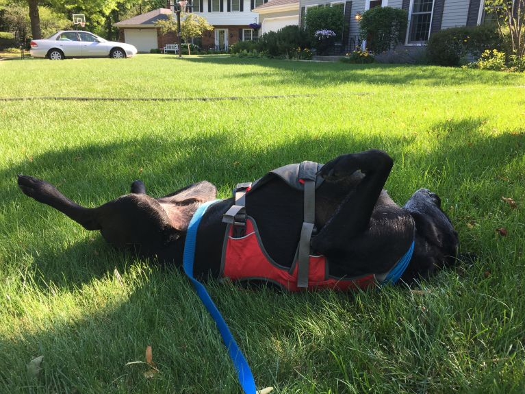 House 5 - How do we get away with calling this a walk??? But in all honesty, when he is upside down, he seems so happy and relaxed.