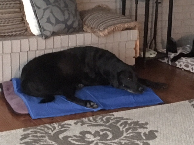 Otis on his chill mat - he uses it from time to time.