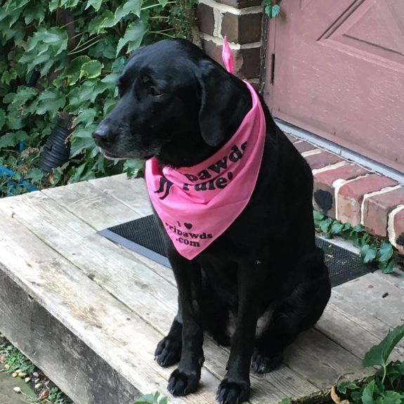Tess' bright pink admission ticket to the Tripawd Nation.