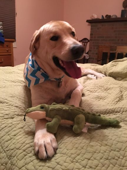 Gator, with his gator, on his new bed.